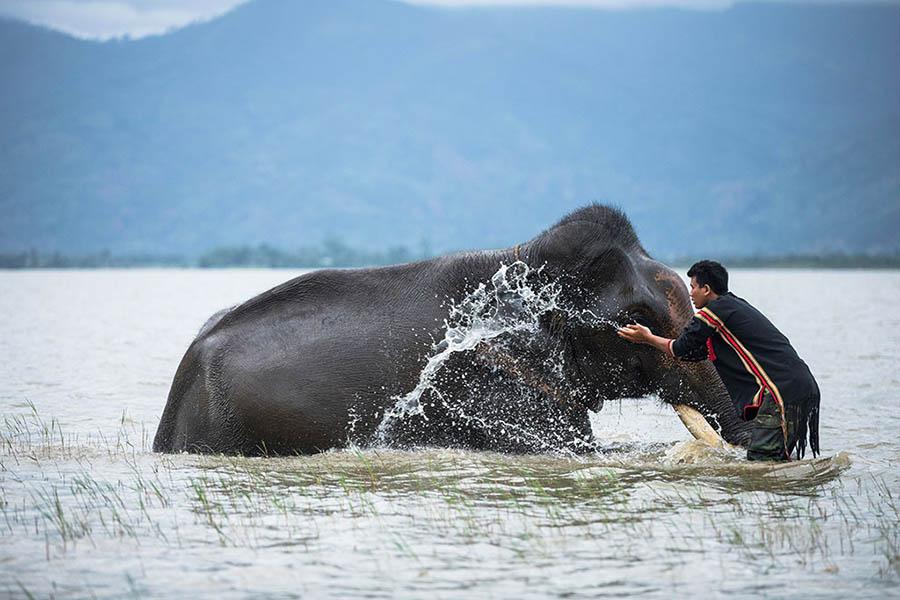 M'Nông Elephant Rituals in Vietnam