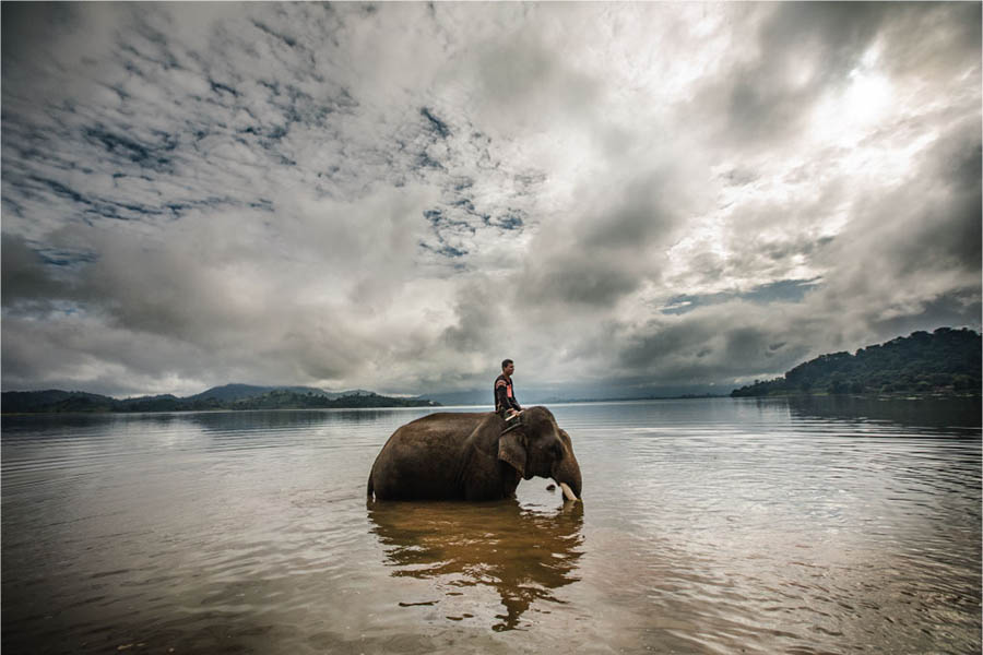 elephant Vietnam Mnong ethnic rehahn