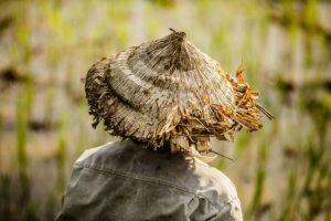 conical-hat-vietnam-rehahn-photograph